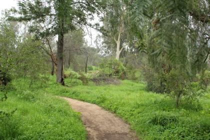 Path of Grass