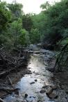 Creek, Trees, and Sun