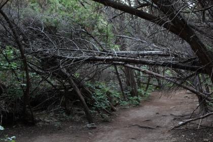 Tree Falls