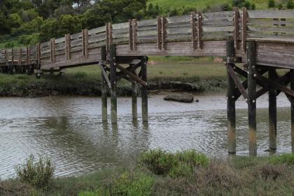 Bridge over creeky
