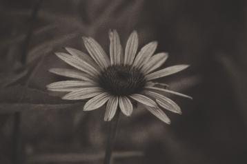 Chicago Flower